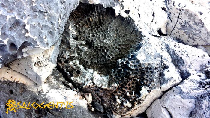 Fossili di Coralli, Castro