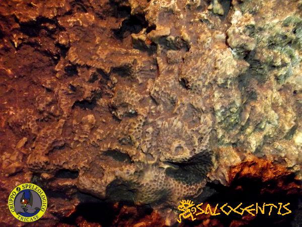 Vora di Vitigliano, resti di coralli