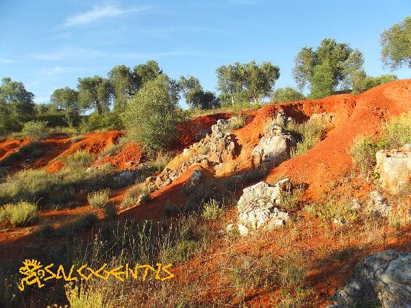 Bosco dei Reali, Poggiardo - fronte di cava di bauxite