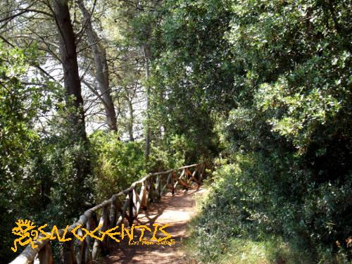 Sentiero nel bosco di Occhiazzi